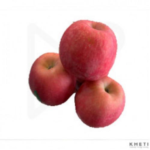 Normal Fuji Apple