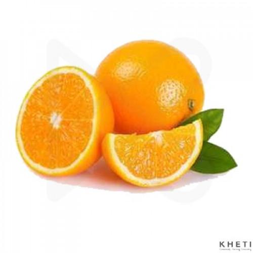 Australian Malta Orange