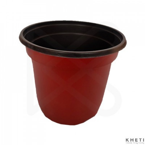 Flower pot (6 inches)