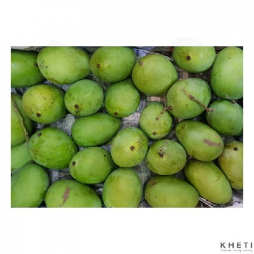 Mango (Malda)