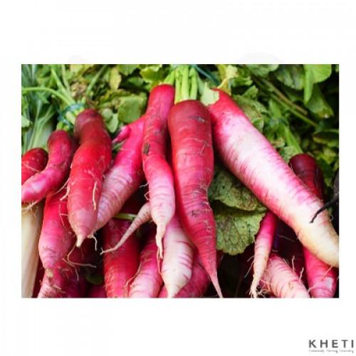 Red Radish (organic)