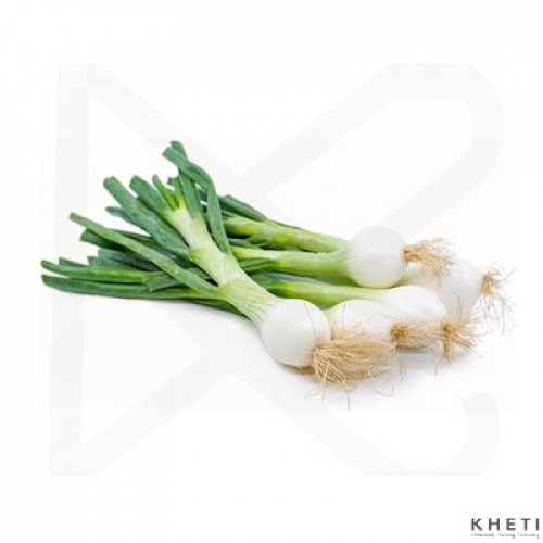 Onion green