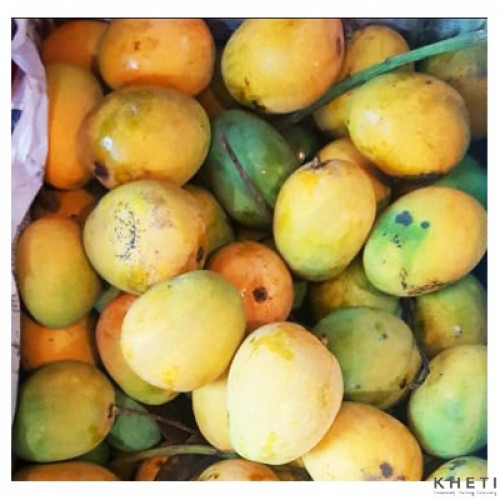 Mango (Zarda)