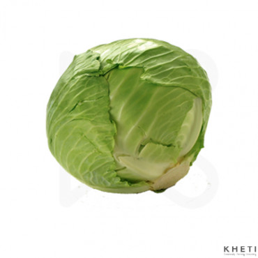 Cabbage (Banda)