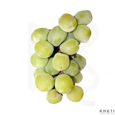 Angur - Grapes - Green