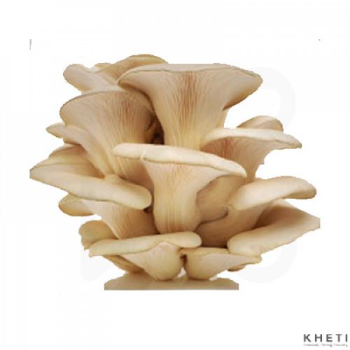 Chyau - Mushroom(kanne)