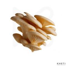 Mushroom (kanya chyau)