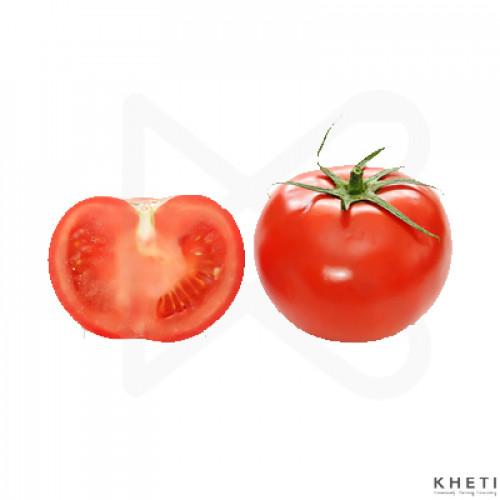 Tomato (Indian)