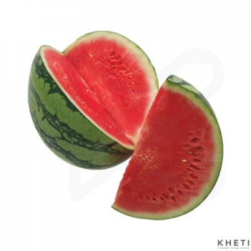 Watermelon, Tarbuja