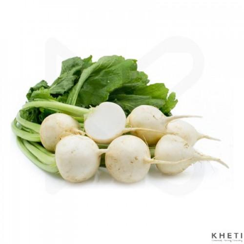 Turnip, Gante mula